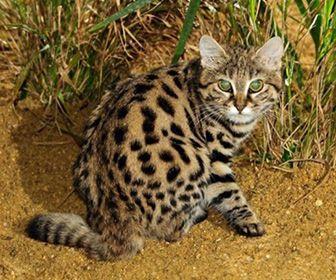 Animales de la zona norte de Chile