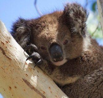 animales-que-duermen-mucho