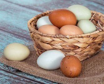 animales-que-nacen-de-un-huevo