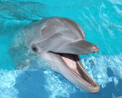 animales-que-nadan