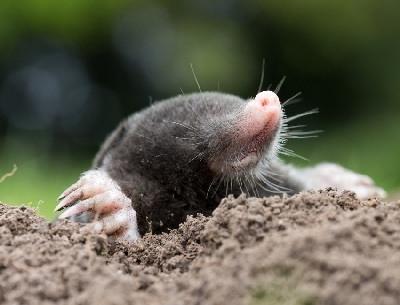 animales-que-viven-debajo-de-la-tierra