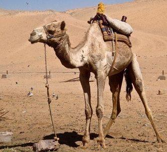animales-que-viven-en-el-desierto