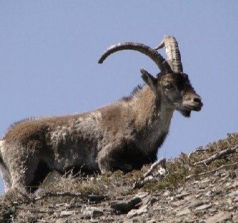 animales-que-viven-en-la-tundra