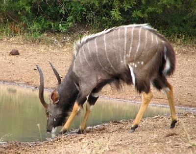 animales que viven en las montanas