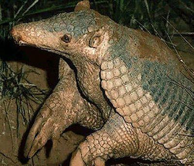 Animales-del-Peru-en-peligro-de-extincion