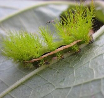 animales-que-parecen-plantas