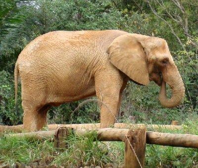animales-que-viven-en-africa