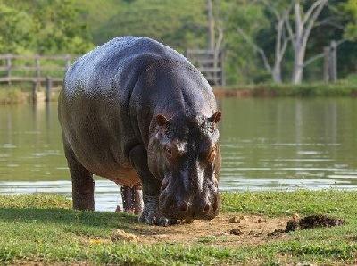 animales-que-viven-en-agua-dulce