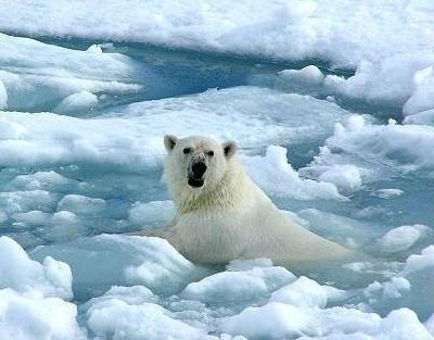 animales-que-viven-en-el-polo-norte