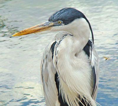 animales-que-viven-en-el-rio