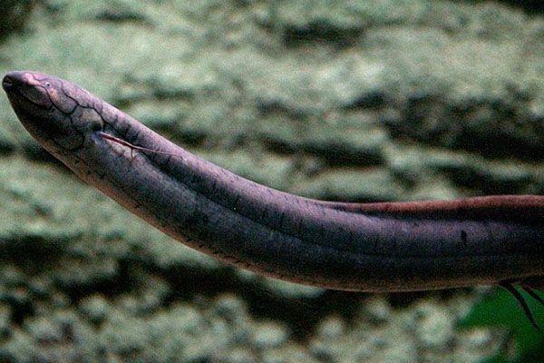 Animales acuaticos que respiran de manera similar a los seres humanos