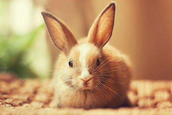 Cómo Respiran los Conejos? - Queanimal.com