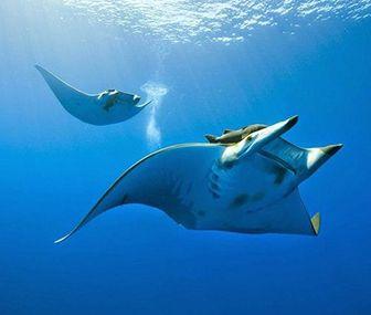 cuantas especies viven en el mar