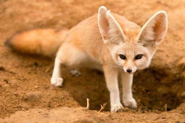 que comen los animales del desierto
