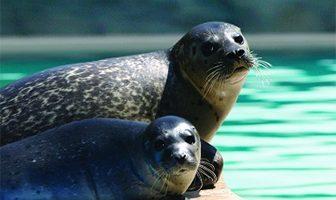 que comen los animales marinos