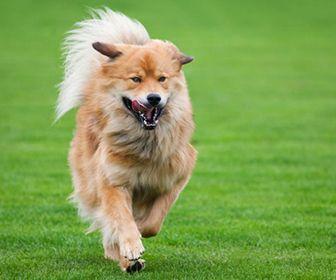 respiracion de los perros