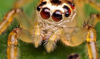 como respiran las arañas