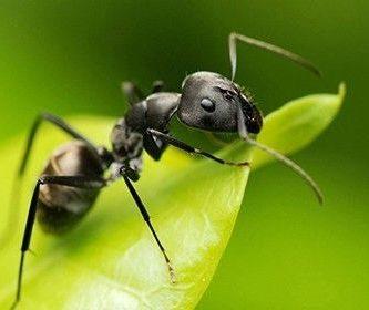 como respiran las hormigas