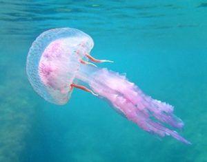 como respiran las medusas
