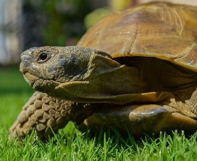 como respiran las tortugas