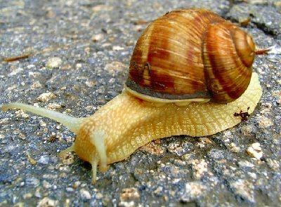 como respiran los caracoles