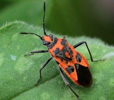 como respiran los insectos