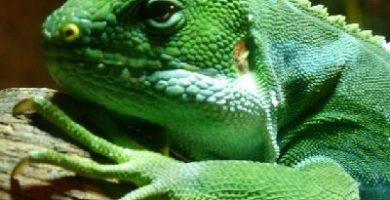 como respiran los reptiles