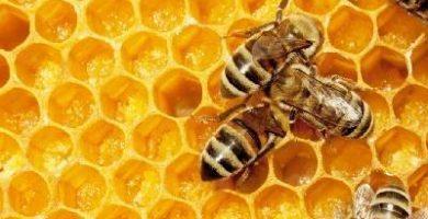 como se reproducen las abejas