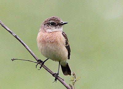 como se reproducen las aves