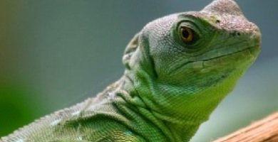 como se reproducen los reptiles