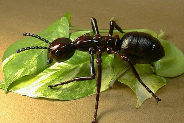 informacion sobre insectos