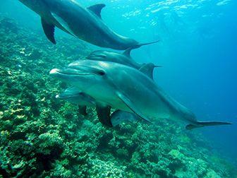 informacion sobre los delfines