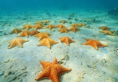Que comen las estrellas de mar de que se alimentan for Caracoles de jardin que comen