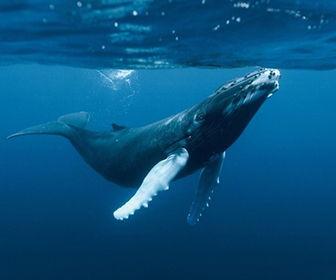 que tipo de animales habitan en el mar