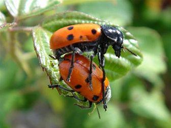 reproduccion insectos