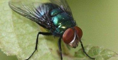 como respiran las moscas