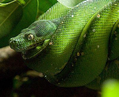 como respiran las serpientes
