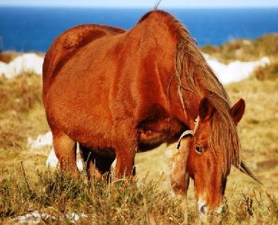como respiran los caballos