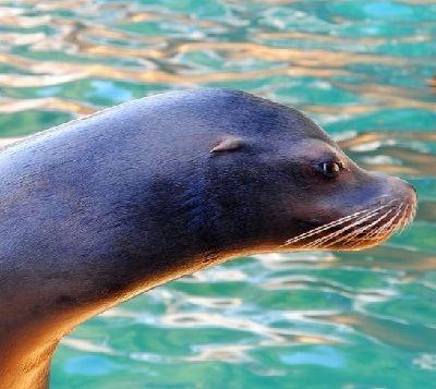como se reproducen los animales marinos