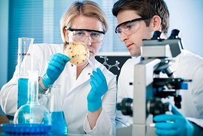 como se reproducen los microorganismos