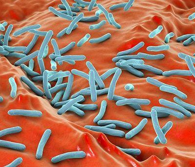 como se reproducen los organismos unicelulares
