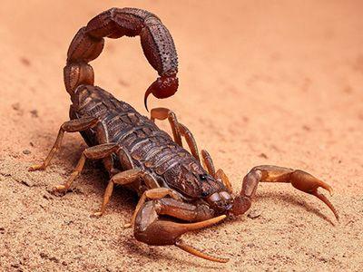 donde viven los escorpiones