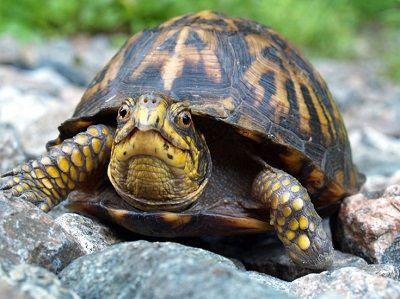 que comen las tortugas