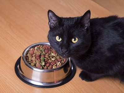 Como alimentar a un gatito correctamente