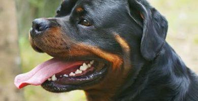Respiracion normal de un perro