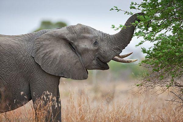 alimentacion de los elefantes