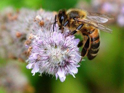 como nacen las abejas