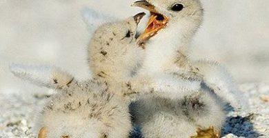 como nacen las aves