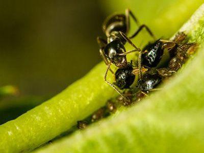 como nacen las hormigas