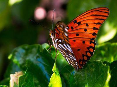 como nacen las mariposas